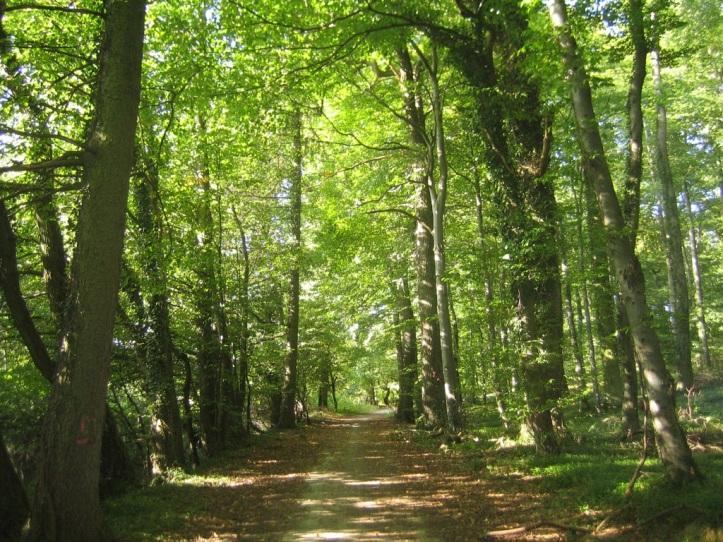bosque[1]